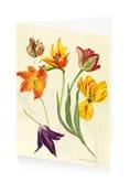 Dame Elizabeth Blackadder Tulips Art Press Card