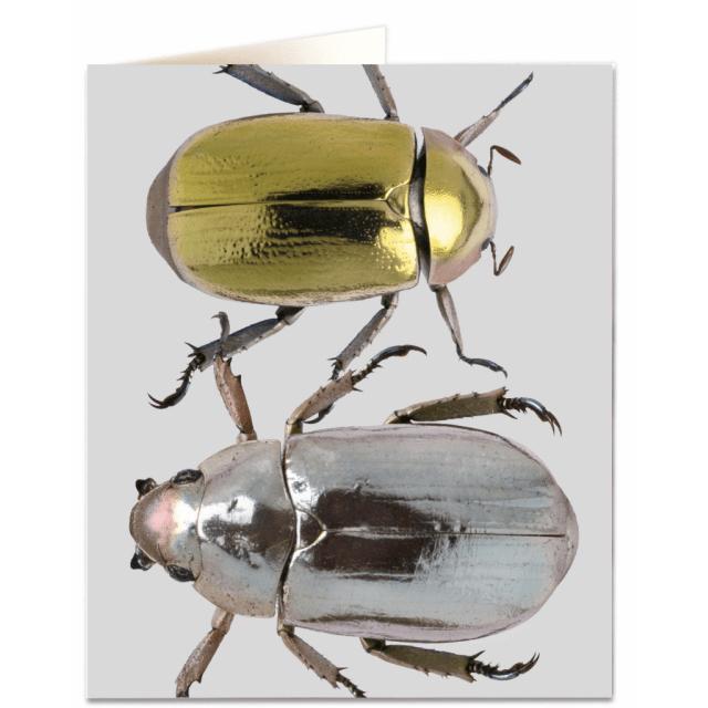 Nhm42 Metallic Beetles Archivist