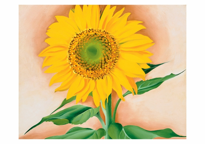 Georgia O Keeffe A Sunflower From Maggie Small Boxed Cards 18